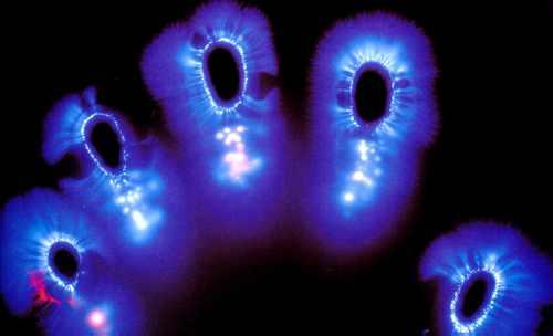 kirlian fingerprints