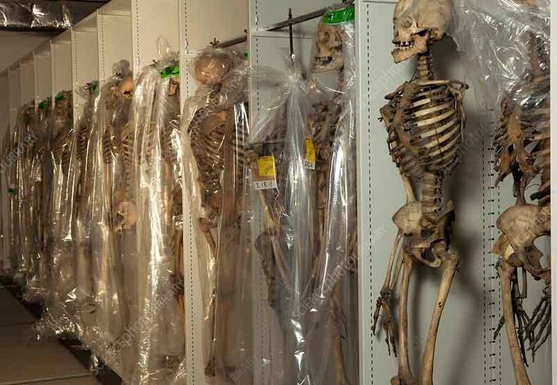 skelet2